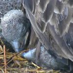 22Apr Pouring rain babies sleeping beak to beak