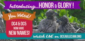 Honor and Glory bare the names of the two baby eagles